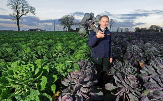 2_caters_brussels_sprouts_field_11-800x498